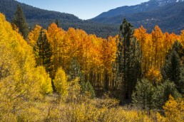 Aspen Trees - Fall Colors - HeartWork Photography Accessible Nature Outings - Copyright 2017 Rick Waller