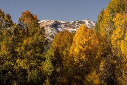 Fall Colors near Lake Tahoe - HeartWork Photography Accessible Nature Outings - Copyright 2017 Rick Waller