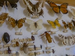 Pinned Insect Collection - SSU Fairfield Osborn Preserve - HeartWork Photography Org - © 2019 Jeree Waller