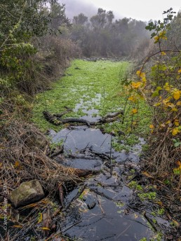 Pond Growth - SSU Fairfield Osborn Preserve - HeartWork Photography Org - © 2019 Jeree Waller