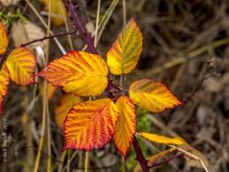 Fall Colors Leaves - SSU Fairfield Osborn Preserve - HeartWork Photography Org - © 2019 Rick Waller