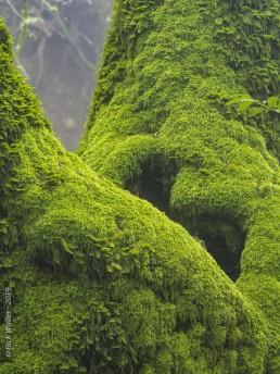 Tree Moss - SSU Fairfield Osborn Preserve - HeartWork Photography Org - © 2019 Rick Waller