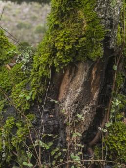 Tree Bark and Moss - SSU Fairfield Osborn Preserve - HeartWork Photography Org - © 2019 Rick Waller