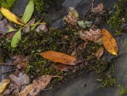 Moss and Leaves - SSU Fairfield Osborn Preserve - HeartWork Photography Org - © 2019 Rick Waller