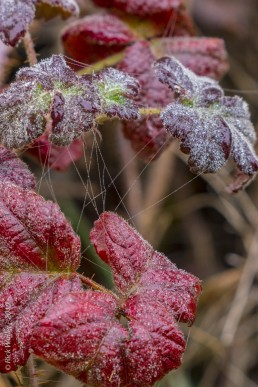 Fall Color Leaves with Spider Webs and Dew Drops - SSU Fairfield Osborn Preserve - HeartWork Photography Org - © 2019 Rick Waller